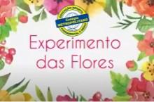 EXPERIMENTO DAS FLORES